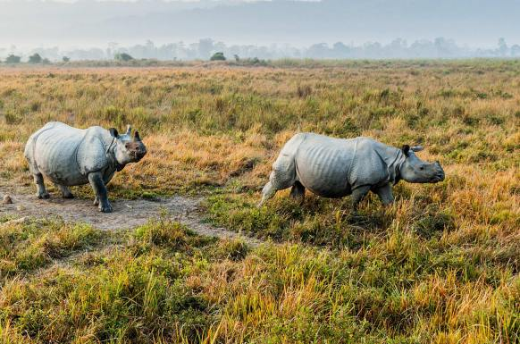 kaziranga national-park