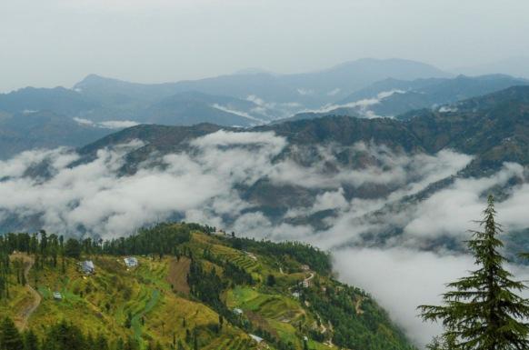 Himalayan Mist – Kufri